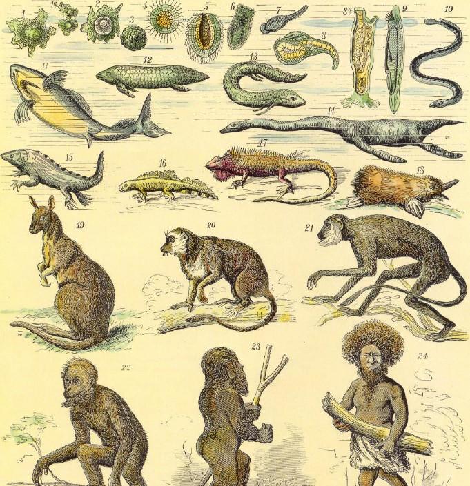 谈一谈人类与生物的密切关系