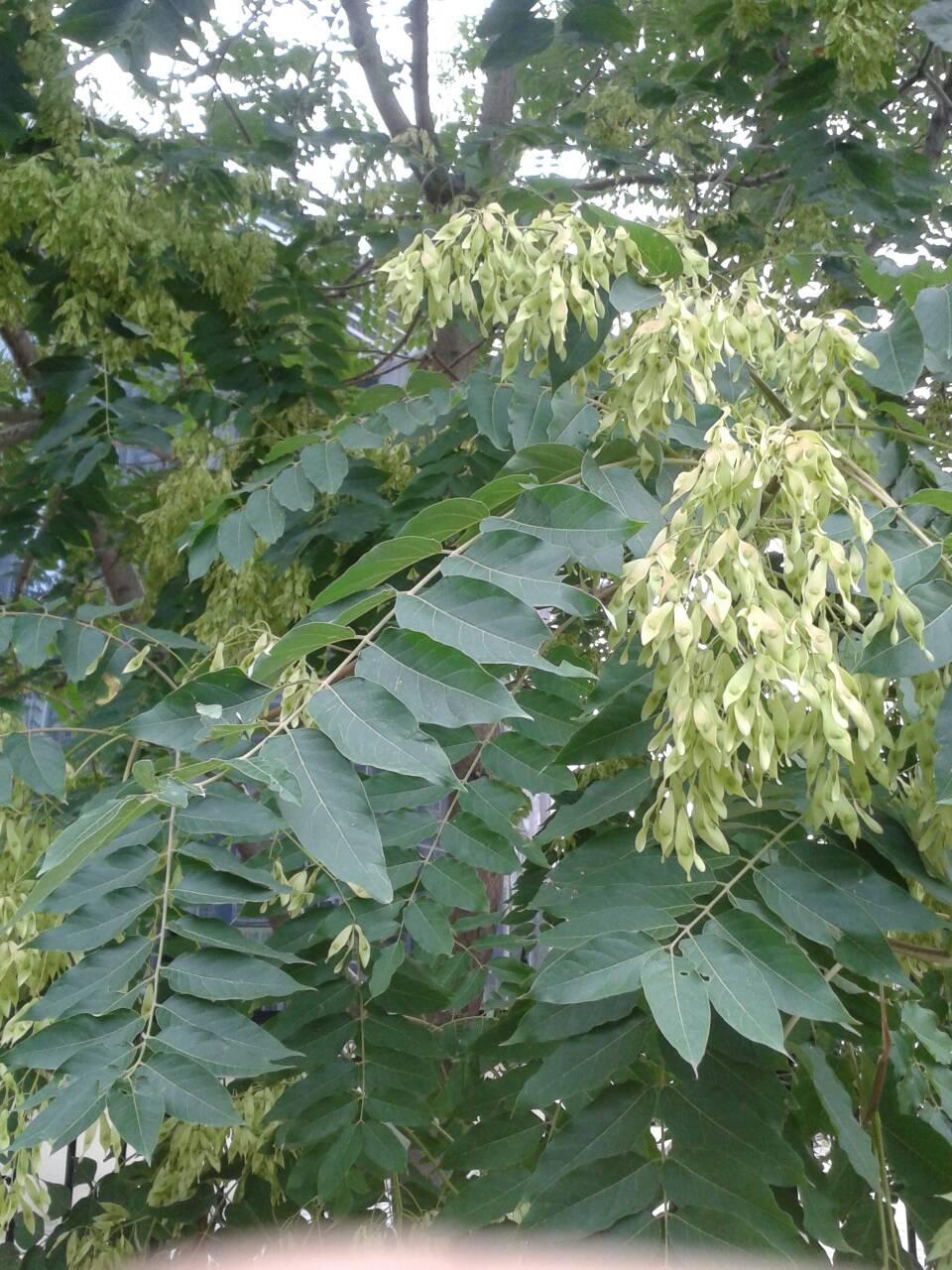 什么的树木_大家谁知道这个图片都是什么名字的树,很常见是路边的常见 ...