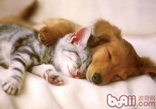 小色狗和猫交配_如何让猫咪停止欺负狗狗?