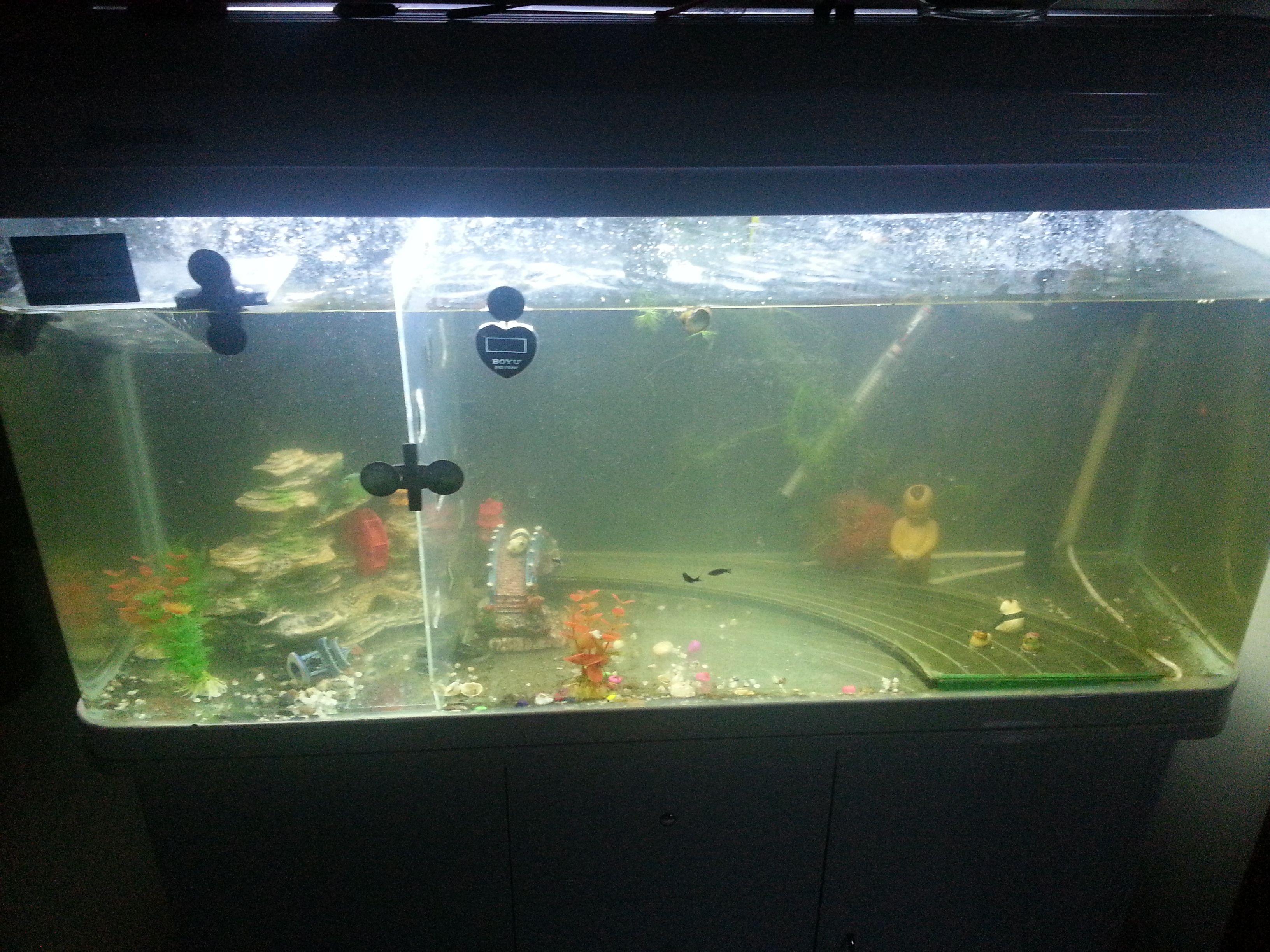热带鱼加热棒_青苔鼠鱼和清洁工鱼哪个比较适合养在鱼缸里?_百度知道