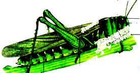 观察蝗虫的示意图,填写下表 蝗虫身体结构头部 对触角, 个单眼和一对 ,口器负责
