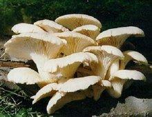 蘑菇的种类_蘑菇所有种类的图片_百度知道