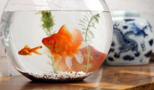 鱼缸如何养冷水鱼_鱼缸除了养鱼,还能养些什么?_百度知道