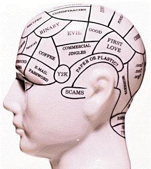 大脑皮层的发展顺序