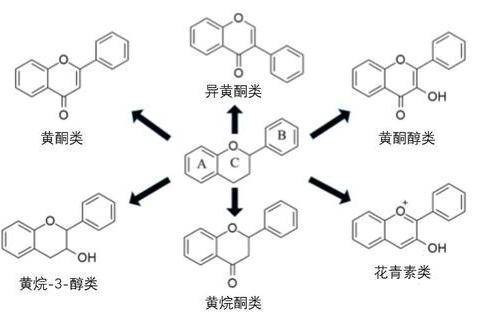 黄酮甙有什么作用_黄酮和类黄酮的区别_百度知道