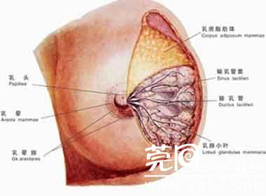 乳腺包块的护理措施