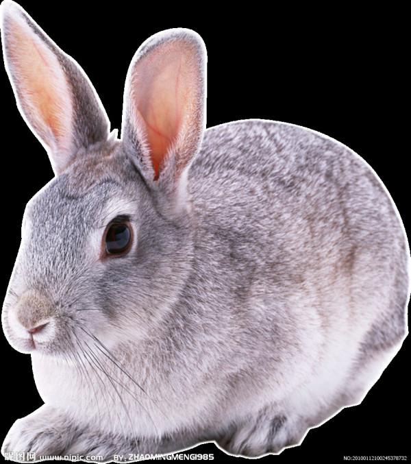 长尾巴的兔子_兔子长什么样的。_百度知道