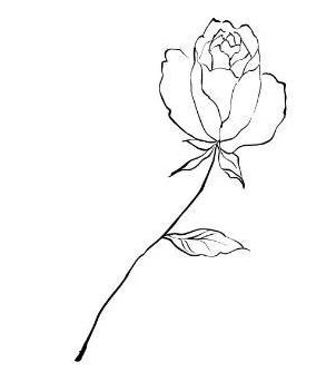 怎样画一幅最漂亮的简笔画花