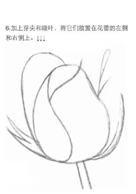 怎样画玫瑰花素描简便图片