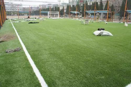 踢球者皇冠比分2450足球场上的草坪都是用的什么草叫什么名字?