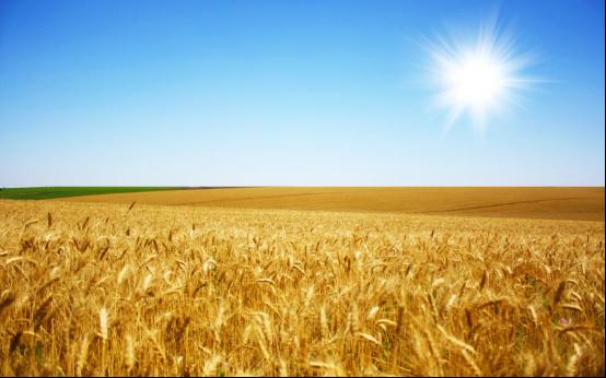 风吹麦浪诗词 描写麦浪的诗词有哪些