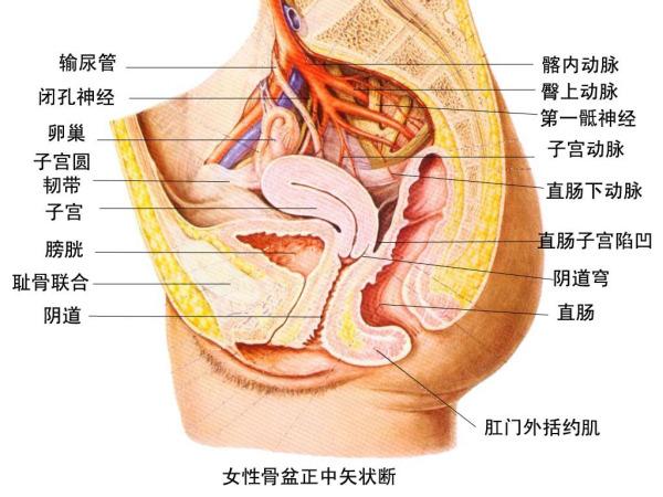 直乙状结肠炎的症状