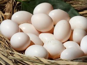 一个鸽子蛋的营养抵得上10个鸡蛋的营养吗?如果抵不上,可以抵几个? 鸡蛋的营养好还是鸽子蛋的营养好?