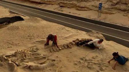 """沙漠里竟有鲸鱼化石!""""鲸之陵""""到底是怎么形成的?"""