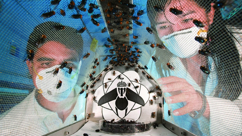 养殖苍蝇,人类这样做到底是何居心?