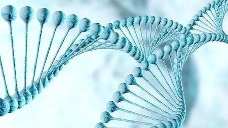 贫穷能影响基因,还会遗传给下一代?这真不是开玩笑…