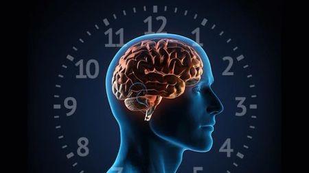 为什么我们有时会觉得白天很累,但一到晚上却精神抖擞?