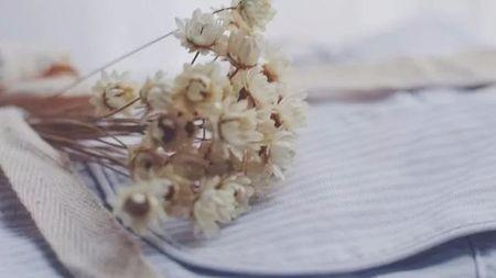 小隐的素言素语丨每株植物,都会在季节里绽放