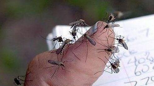 消灭所有蚊子对生态有没有影响?的头图
