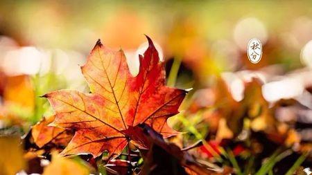 秋分丨秋分后天气会凉下来吗?秋分习俗的那点事!的头图