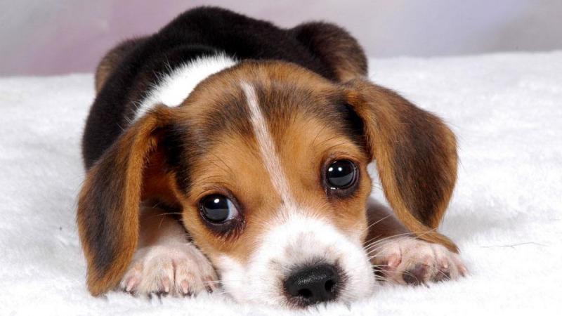 巧克力、葡萄、牛油果……狗狗到底能不能吃?