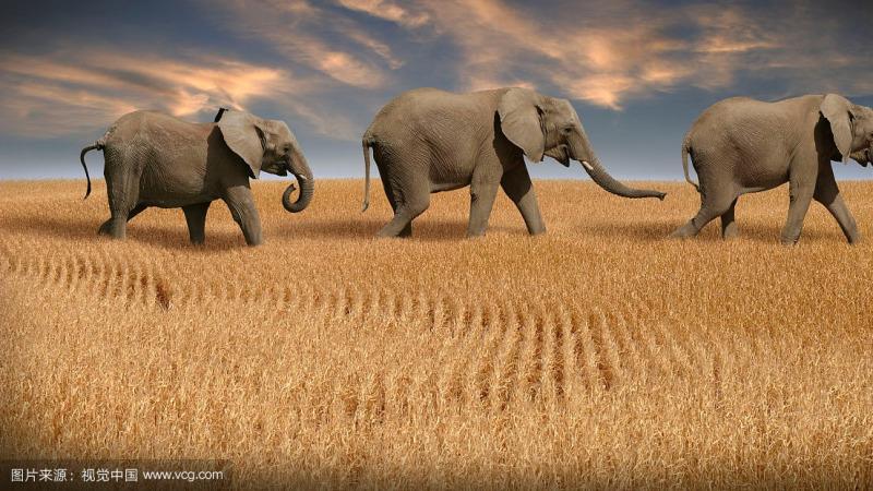 如果根据进化论,那么玉米能进化成大象吗?