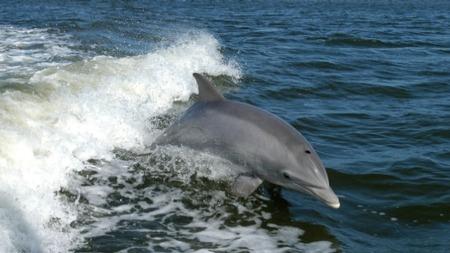飓风虽然对人类有害,但对海豚有益的头图
