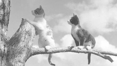 坚守列宁格勒的功臣:卫国战争中的苏联猫