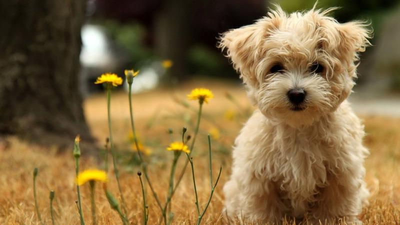 如果你也有一只狗狗,那么请你好好的去了解它
