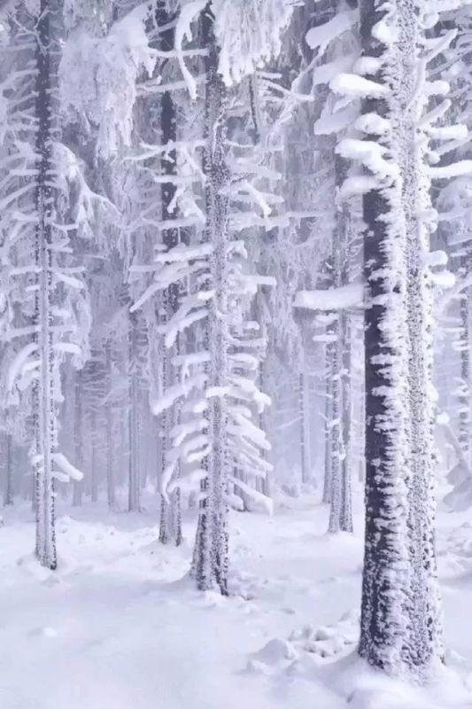 冬天玫魂曲谱_冬天卡通图片